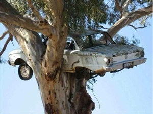 """Always ask about the vehicle's accident history, i.e. the """"falcon in a tree"""" syndrome."""
