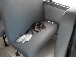 A cat takes a nap on a seat in a bus in this photo by Lisa Hoffman, who works for a school bus...