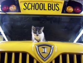 Pictured is Eve, the subject of Itty Bitty School Bus Kitty, written by school bus driver Katie...