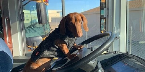 Litchfield Elementary School District #79adopted Floyd, a 7-month-old miniature Dachshund, to...