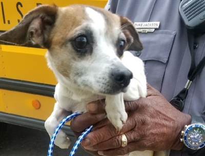 A Chihuahua who boarded a Texas school bus and refused to get off was taken to an animal shelter by police. Photo courtesy Austin (Texas) Independent School District