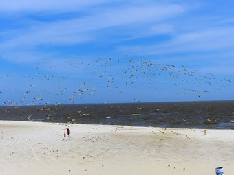 Biloxi Landscape in 2016 (Photo credit Laura Lee Huttenbach)