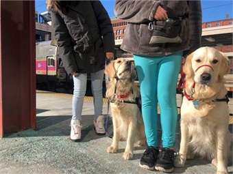 On Saturday, January 26, 2019, six GOFI service dogs and their handlers traveled from Norwood to South Station on the MBTA Commuter Rail. The group connected to the Silver Line to experience a connected multimodal journey. Photo: Keolis