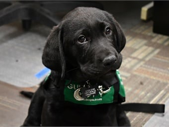 C-TRAN's Lead Travel Trainer, began working with Jamboree, a 10-week-old black lab, earlier this month.