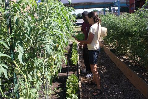 The Walnut Hill Community Farm at 46th and Market Streets is marking its second season. It is operated by The Enterprise Center Community Development Corp., which was able to hire 10 teens this year for its food ambassadors program.