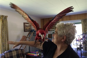 Dawn Coffin, a director of transportation in Maine, has a couple of colorful parrots: a macaw (pictured) and a sun conure.