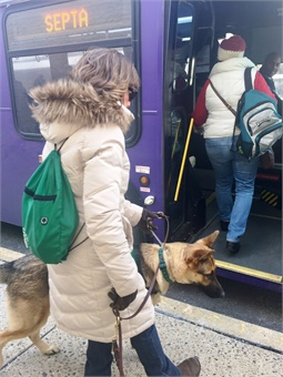 Seeing Eye guide dog-in-training Granger boarding the bus with his trainer Barb. Photo: SEPTA