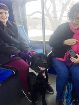 Seeing Eye guide dog-in-training Richard riding his first SEPTA bus with his trainer Abby and her mother Maria. Photo: SEPTA