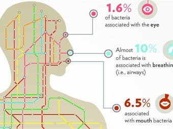 Infographic showing the relative amount of DNA found in the New York subway system form bacteria associated with the human body.