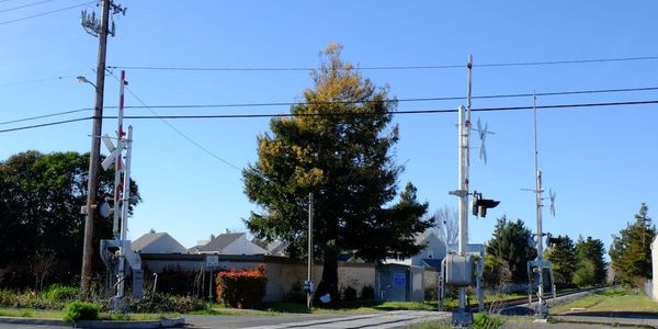 SMART is reviewing options to save a rare green and white Chimera Coast Redwood tree located...