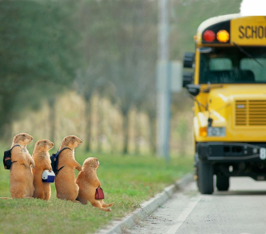 These prairie dogs are ready to board the school bus. The photoshopped photo was sent to us by...