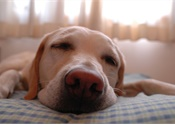 Danger Ahead: Sleep Loss, Safety, and You