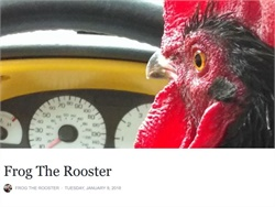 "Frog the rooster has gained fame for a viral video in which it makes a mad dash for the school bus, ready to ""pick up"" its owner. Screenshot from Facebook"