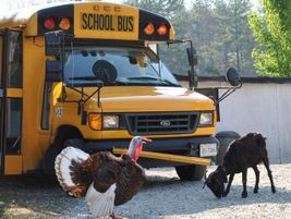 This shot of a rather large turkey and a goat was submitted by Tammy Coates from a Head Start in...