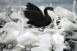 Three Black Swan Events Threaten to Change the Fleet Management Paradigm