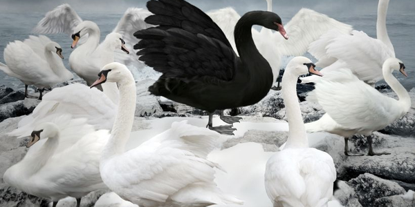 A black swan event is a metaphor to describe an event that unexpectedly changes an existing...