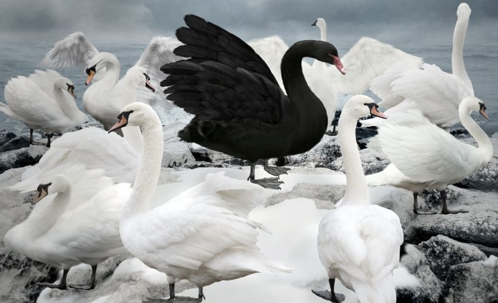 A black swan event is a metaphor to describe an event that unexpectedly changes an existing business or societal paradigm. 