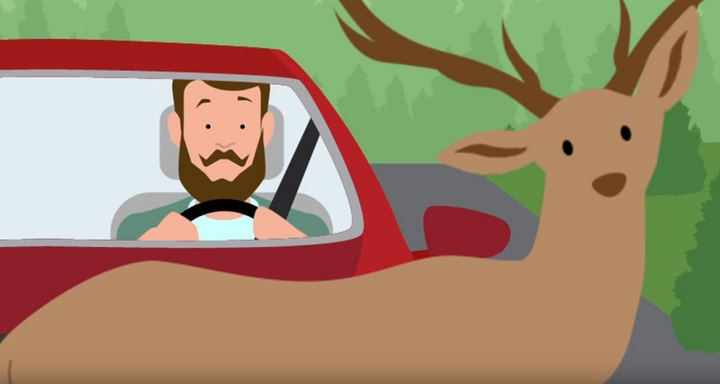 Fleet drivers should be reminded of best practices for avoiding deer as well as what to do if they do encounter one.
