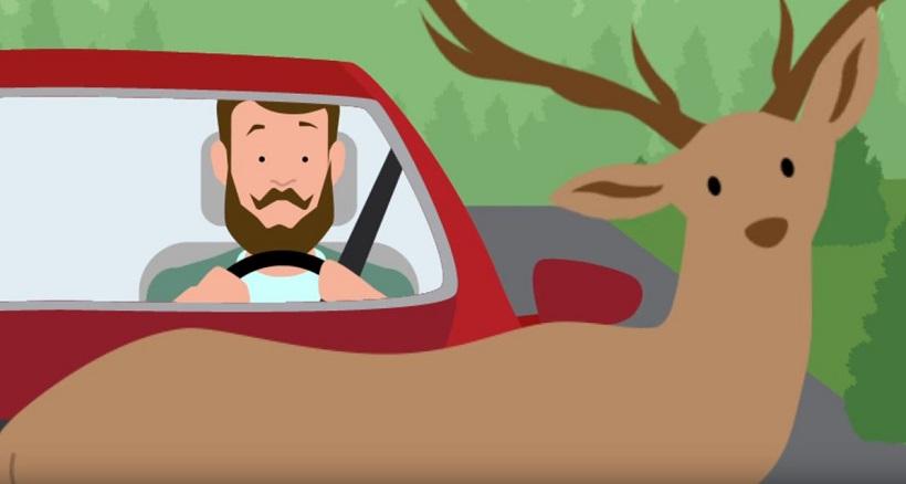 Video: Safe Driving Practices During Deer Season