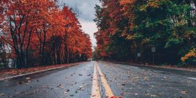 Nearly 8,300 U.S. Roadway Collisions Every Autumn