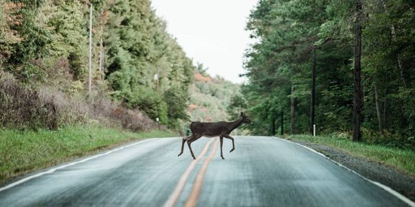 Drivers, watch out; the most dangerous months for animal collisions are November, October, and...