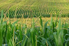Obama Lowers Ethanol Blending Levels