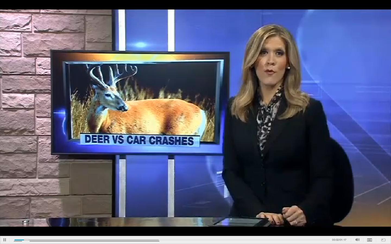 Fleet Safety Video Tip: Preventing Deer Collisions