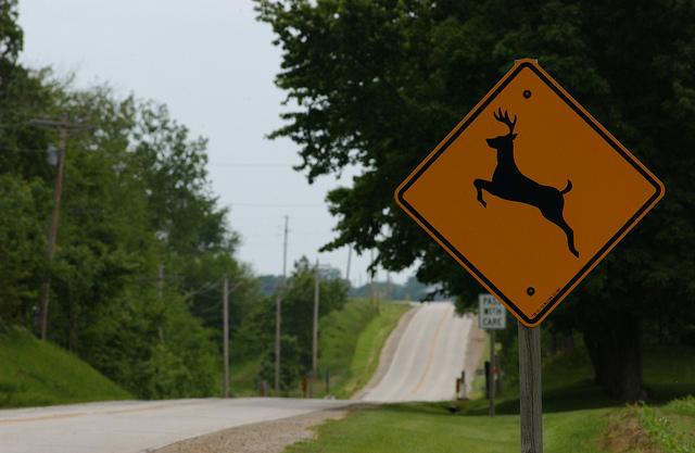 W.Va. Leads Nation in Deer Crashes