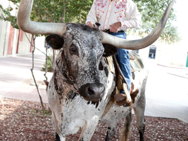 The August 18, Tuesday night evening event was held at Billy Bob's Texas, which featured a...