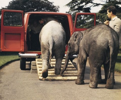 Transport an elephant. Faced with moving two baby elephants at London Zoo in 1965, handlers...