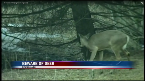 Beware of Crossing Deer
