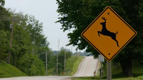 Deer-Vehicle Crashes Rising