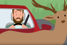 Steps to Avoid Deer-Vehicle Crashes