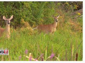 Safe Driving Tips During Deer Season