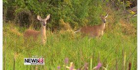 Dealing with Deer Crossings