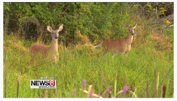 The fall driving season brings increased risk of animal crossings in many areas of the country.  - Screenshot via WTNH.