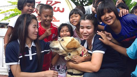 Davis Hawn's assistance dog Booster travels the world with Hawn to help demonstrate that dogs...