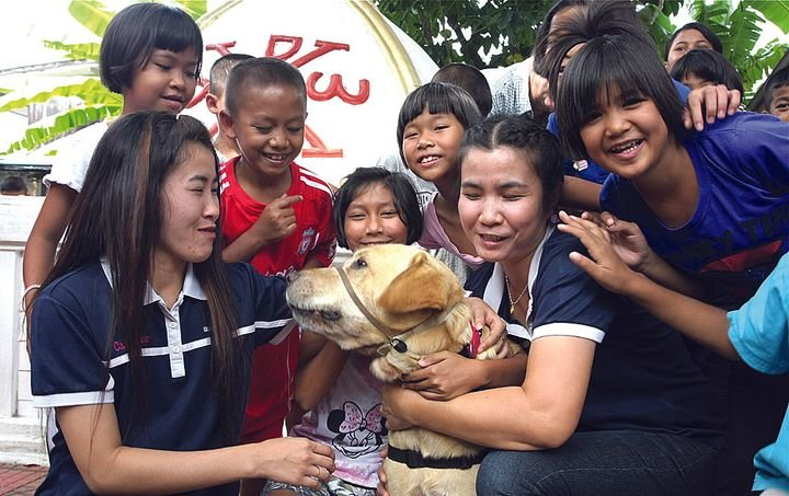 Davis Hawn's assistance dog Booster travels the world with Hawn to help demonstrate that dogs can aid people with physical and emotional disabilities. Here, Booster interacts with HIV-infected children in a Thai orphanage. -