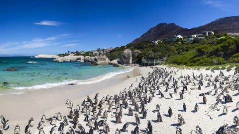 South Africa's advanced highway infrastructure serves well-known tourist destinations such as...