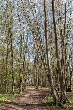 The U.K.'s Heartwood Forest. Photo via www.geograph.org.uk.