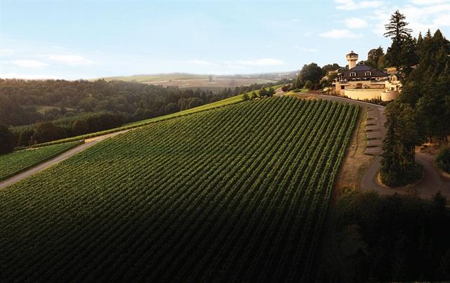 Willamette Valley Vineyards' estate vineyard.