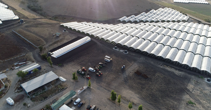 "This farm in Santa Barbara's wine country is owned by Vertical, a multi-state ""seed-to-sale"" cannabis operator. The company owns 4 million sq. ft. of cultivation that supplies 227 owned retail distribution outlets through a fleet of 10 Ford Transit vans.
