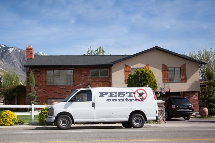 Based on an analysis of historic data from Verizon Connect's Reveal platform, June is expected to be the busiest month for pest control this year. - Photo via insight pest/Flickr.