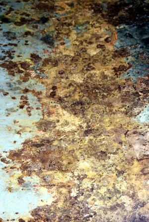 The presence of bacteria and fungi in conjunction with water in fuel causes corrosion to develop in storage tanks. Along with water, rust, dirt and bacteria settle to the bottom of the tank and ultimately can penetrate tank walls.