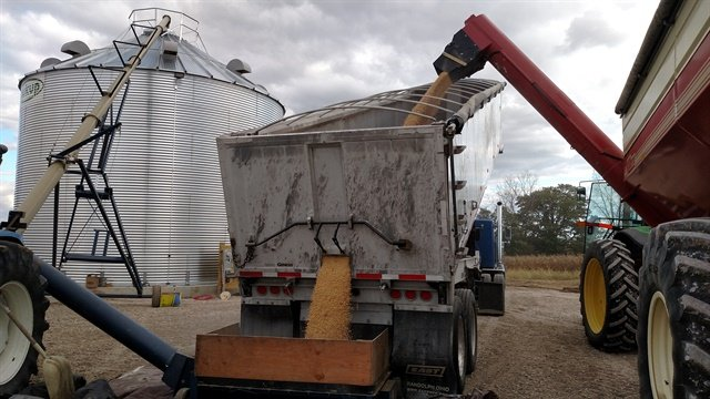 Soybeans move from Killbros field cart (right) into East end dump and then into a silo for storage. Photos: Tom Berg