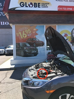 A snake was found in a hood of a rental car at a Globe Car Rental location in Montreal.