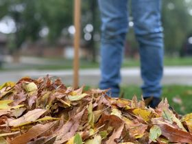 NC City Suspends Yard Waste Pickup to Protect Operators