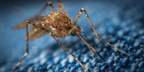 Louisiana Pest Control Fleet Uses CalAmp To Protect Citizens, Animals