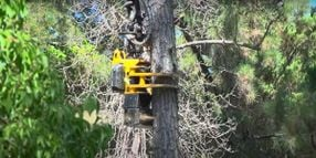 Caltrans Uses New Safer, Faster, and Efficient Tree Removal Tech