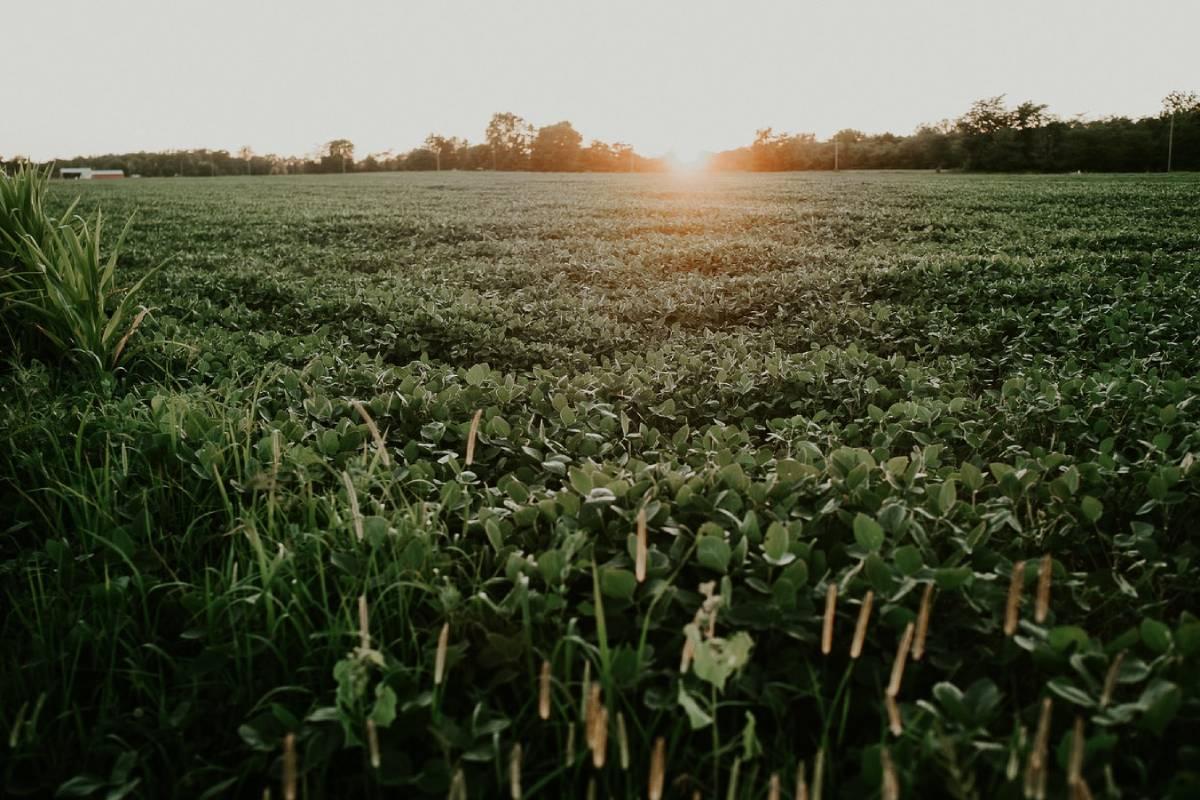 Soybean Farmers Help City of Madison Grow Sustainable Fleet